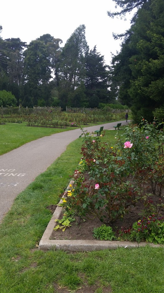 Can't see a pretty rose garden and not think of Barry's mum.